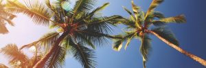 Summer vacation palm trees